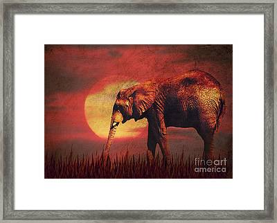 African Elephant Framed Print by Angela Doelling AD DESIGN Photo and PhotoArt