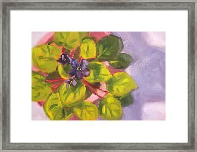 African Violet Still Life Oil Painting Framed Print by Nancy Merkle