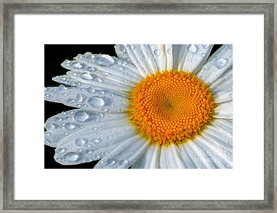 After The Rain Framed Print by Neil Doren