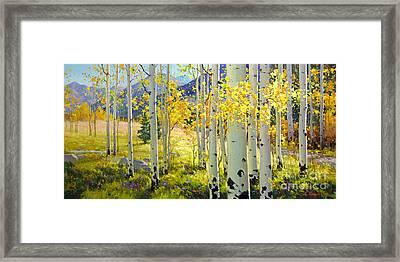 Afternoon Aspen Grove Framed Print by Gary Kim