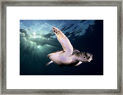 Underwater Diva Framed Print featuring the photograph Afternoon by Sergi Garcia