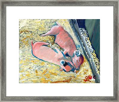 Afternoon Snooze Framed Print by Gloria Condon