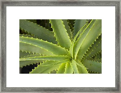 Agave  Big Sur California Framed Print by Sebastian Kennerknecht