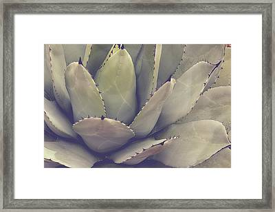 Agave Framed Print by Joy StClaire