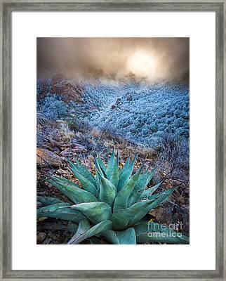 Agave Winter Framed Print by Inge Johnsson