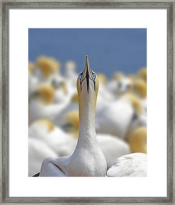 Ahead Framed Print by Tony Beck