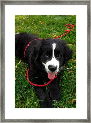 Ain't I Irresistible Framed Print by Paul Wash
