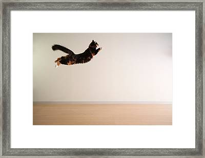 Airborne Cat Framed Print by Junku