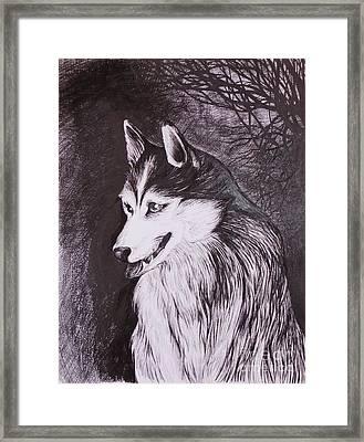 Akela Framed Print by Anna  Duyunova