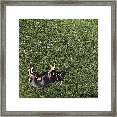 Alabama In The Sun Framed Print by Cortney Herron