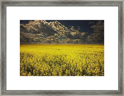 Alberta, Canada A Canola Field Under Framed Print by Darren Greenwood