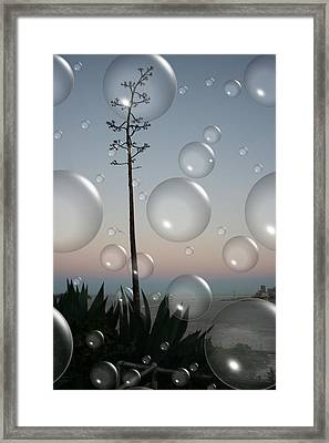 Alca Bubbles Framed Print by Holly Ethan