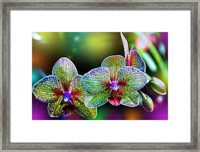Alien Orchids Framed Print by Bill Tiepelman