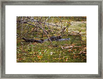 All Aboard Framed Print by Christopher Holmes