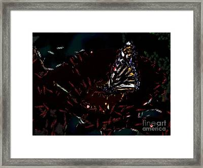 All About The Butterfly  Framed Print by Catherine Lott