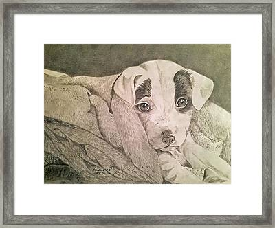All Clean And Ready To Play Framed Print by Brenda Brown