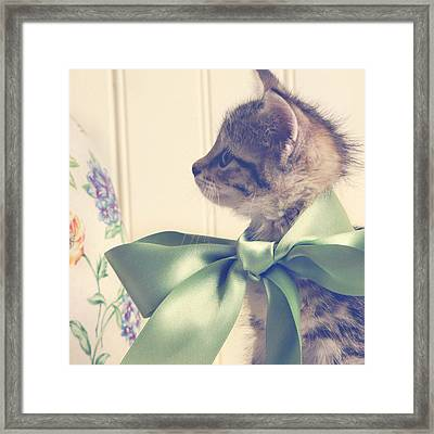 All Dressed Up Framed Print by Amy Tyler