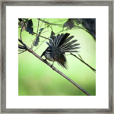All Fanned Out Framed Print by Heather Thorning