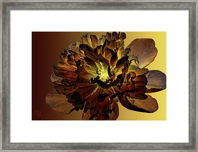 All For You 1 Framed Print by Angelina Vick
