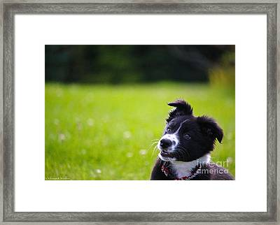 All Grins And Glory Framed Print by Susan Herber