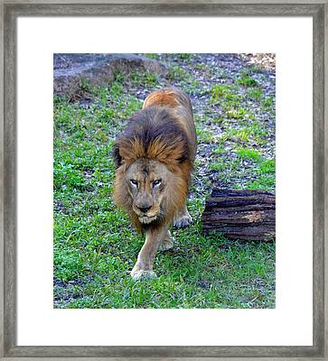 All Hail The King Framed Print by Richard Bryce and Family