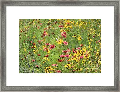 Allegro Framed Print by Joe Jake Pratt