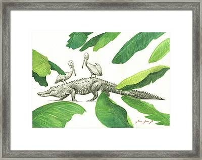 Alligator With Pelicans Framed Print by Juan Bosco