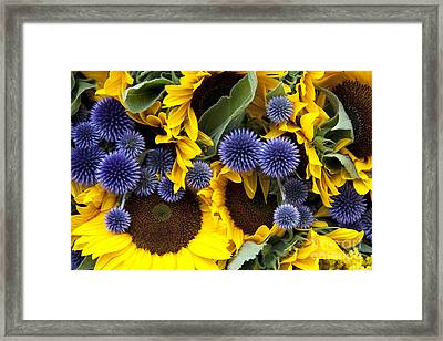 Allium And Sunflowers Framed Print by Jane Rix