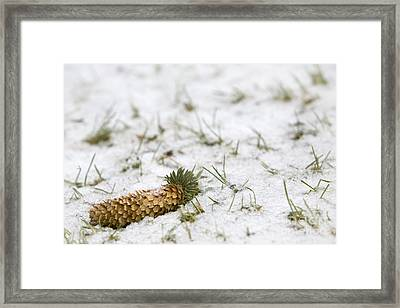 Alone Framed Print by Jeannie Burleson