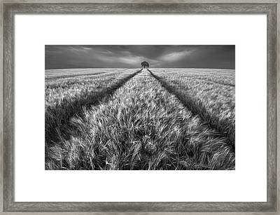 Alone Framed Print by Piotr Krol (bax)