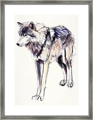 Alpha Framed Print by Mark Adlington