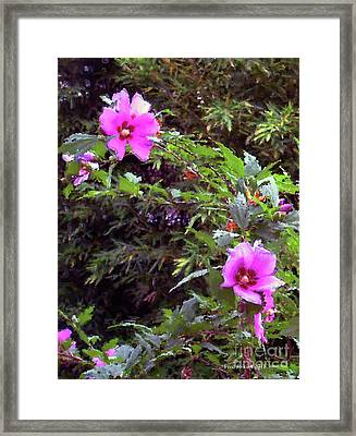 Althea Framed Print by Fred Jinkins