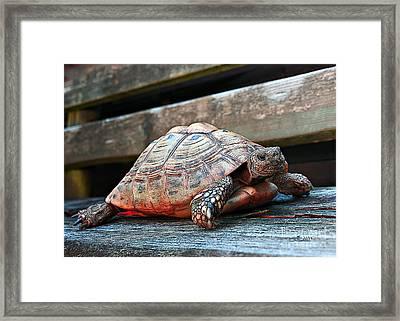 Always At Home Framed Print by Jutta Maria Pusl