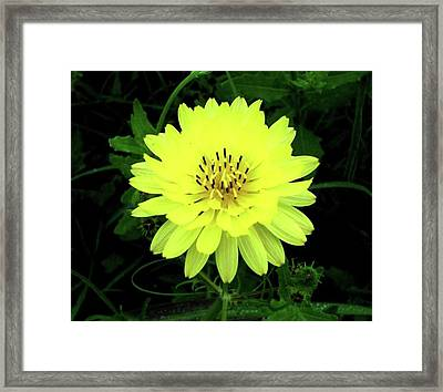 Amarillo Framed Print by Amber Stubbs