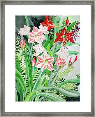 Amaryllis And Hippeastrum Framed Print by Vishwajyoti Mohrhoff