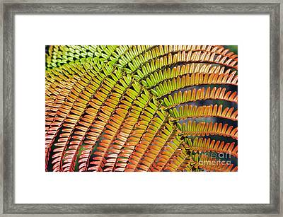 Amaumau Fern Frond Framed Print by Greg Vaughn - Printscapes