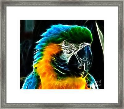 Amazing Parrot Portrait Framed Print by Pamela Johnson