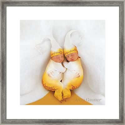 Amelia & Kate In Moth Orchid Framed Print by Anne Geddes