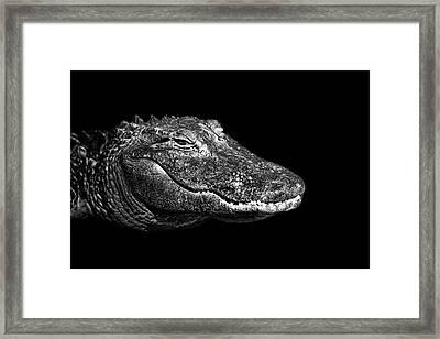 American Alligator Framed Print by Malcolm MacGregor