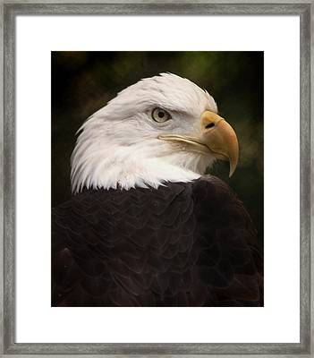 American Bald Eagle Framed Print by Joseph G Holland