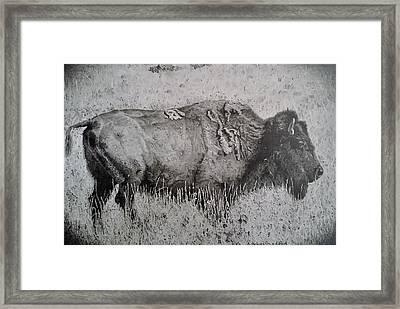 American Bison Framed Print by Adrienne Deines