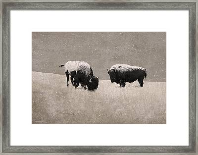 American Bison Framed Print by Ron Jones