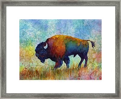 American Buffalo 5 Framed Print by Hailey E Herrera