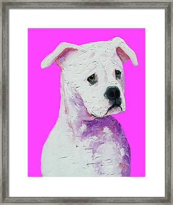 American Bulldog On Pink Framed Print by Jan Matson
