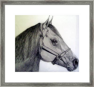 American Quarter Horse Framed Print by Gary Stull