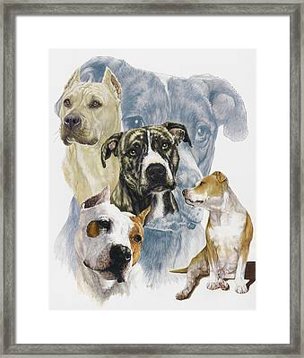 American Staffordshire Terrier Framed Print by Barbara Keith