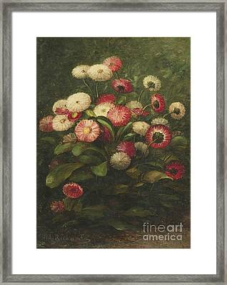 American Title Daisies Framed Print by Thomas Addison