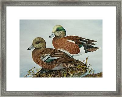 American Widgeons Framed Print by Elaine Booth-Kallweit