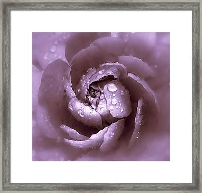 Amethyst Framed Print by Jessica Jenney