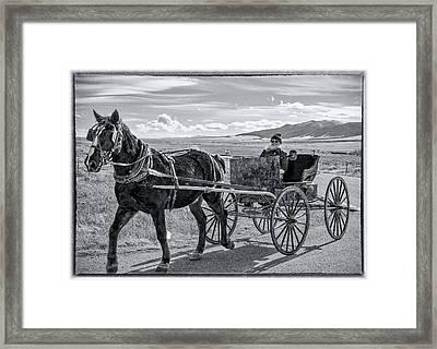 Amish Buggy Driver Framed Print by John Bartelt